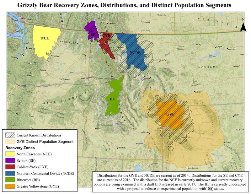 Grizzly bear recovery zones, distributions, and distinct population segments.