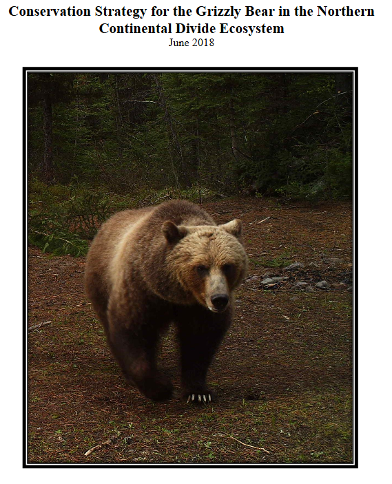 Grizzly Bear Committee Delays Vote On NCDE Conservation Strategy