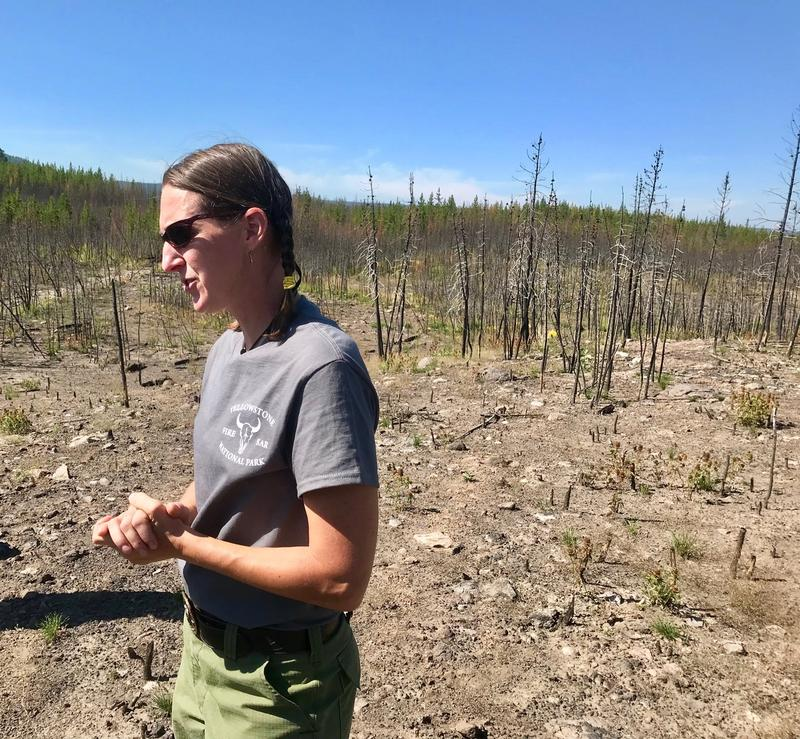 Yellowstone National Park Fire Ecologist Becky Smith in an area that burned in 1988, and again in 2016