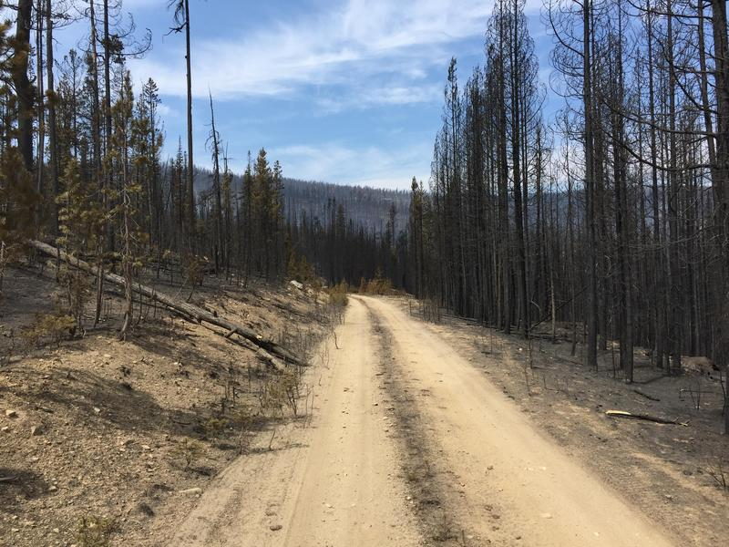 Road 1381 going through the middle of the Reynolds Lake Fire.