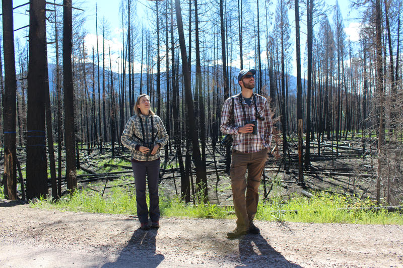 Megan Fylling and William Blake try to identify a bird flitting through the trees in a part of the Rice Ridge burn area near Seeley Lake.