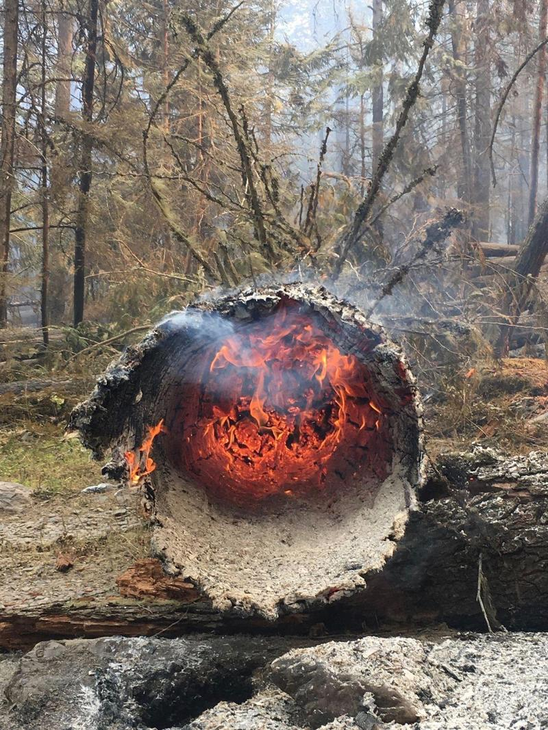 Tree burned by Glacier's Howe Ridge fire