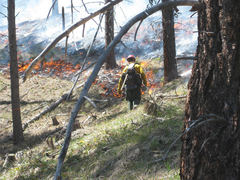 Controlled burn in the Bitterroot National Forest.