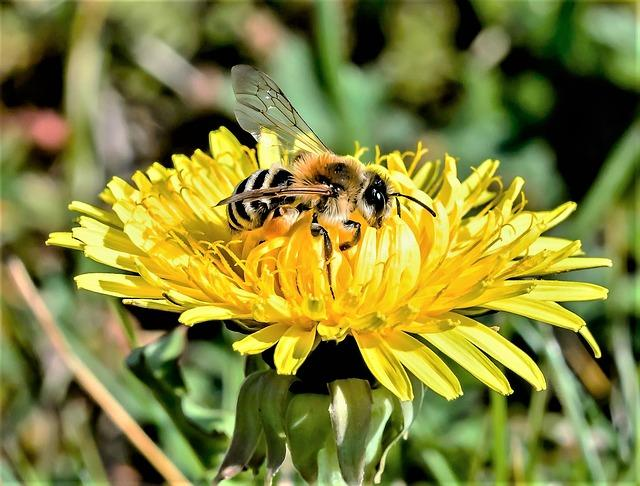 Bees and wasps are easily irritable in September.