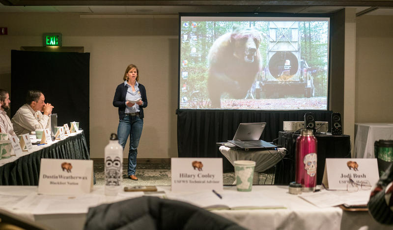 Hilary Cooley, the grizzly bear recovery coordinator for the Fish and Wildlife Service, presenting at an annual meeting Tuesday on grizzlies in the Northern Continental Divide Ecosystem. Nov. 20, 2018