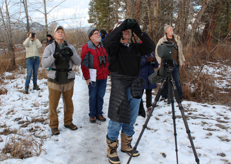 A group of birders try to identify a group of birds perched in a tree at Council Grove State Park during the Christmas Bird Count.