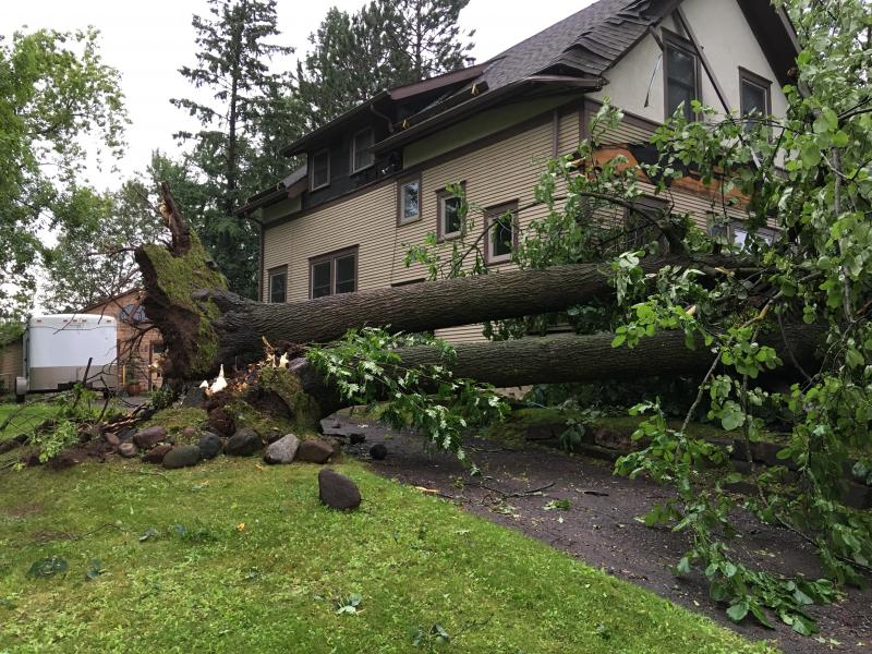 Two large trees fallen next to a house