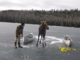 Dave Seaton of Hungry Jack Lodge offers the moose an encouraging word