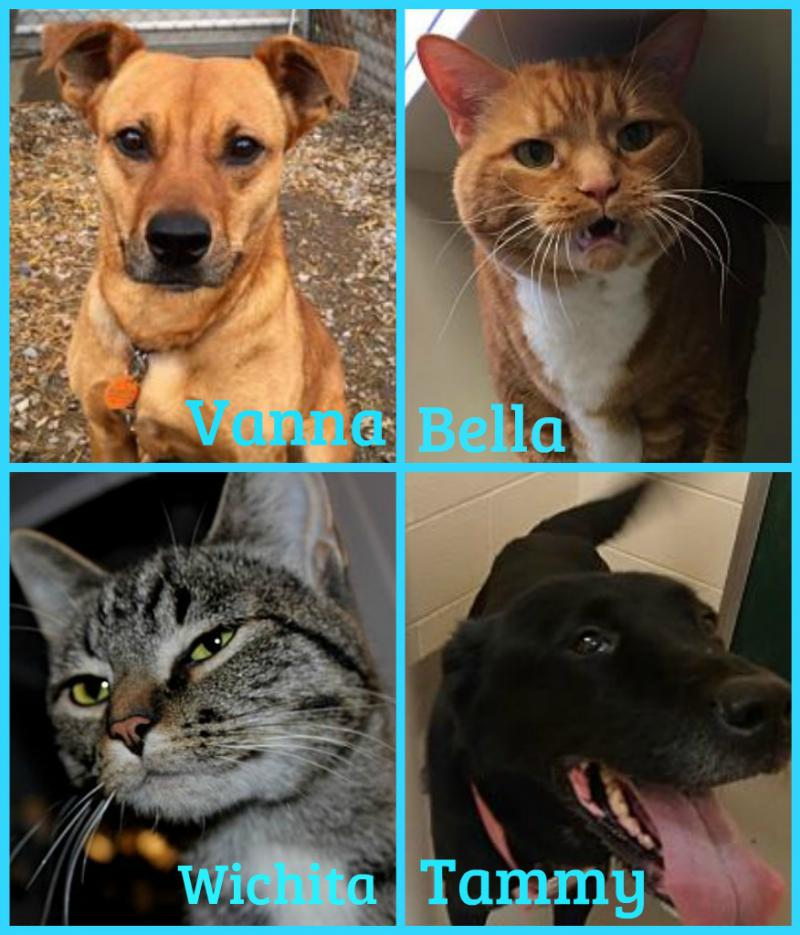 Forever Homes Pets