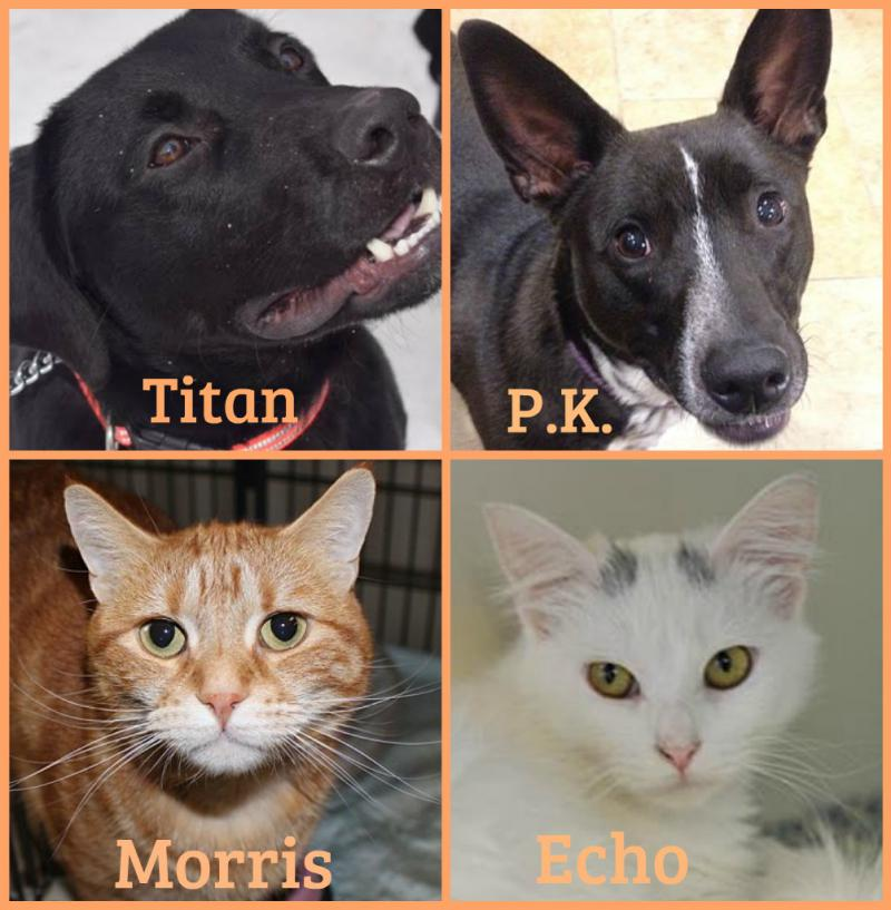 Forever Home Pets