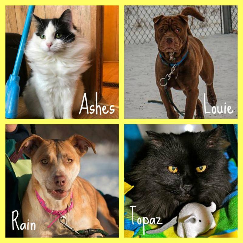 Forever Home Animals