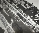 Rorschach Detail