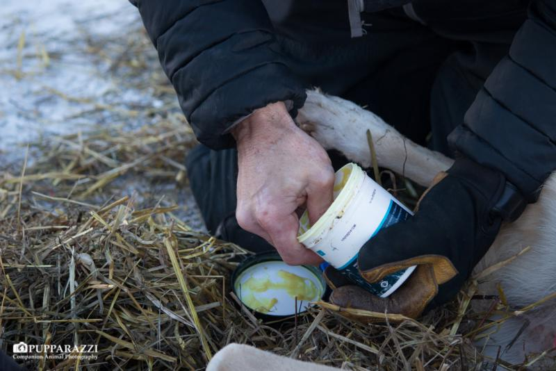 Sore paws are treated with a thick salve to protect them