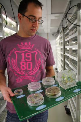 Monsanto research associate Ben Schaefer, standing in a growth chamber at the company's Chesterfield Village Research Facility, holds a display with samples from the initial 10 weeks of life for corn plants.