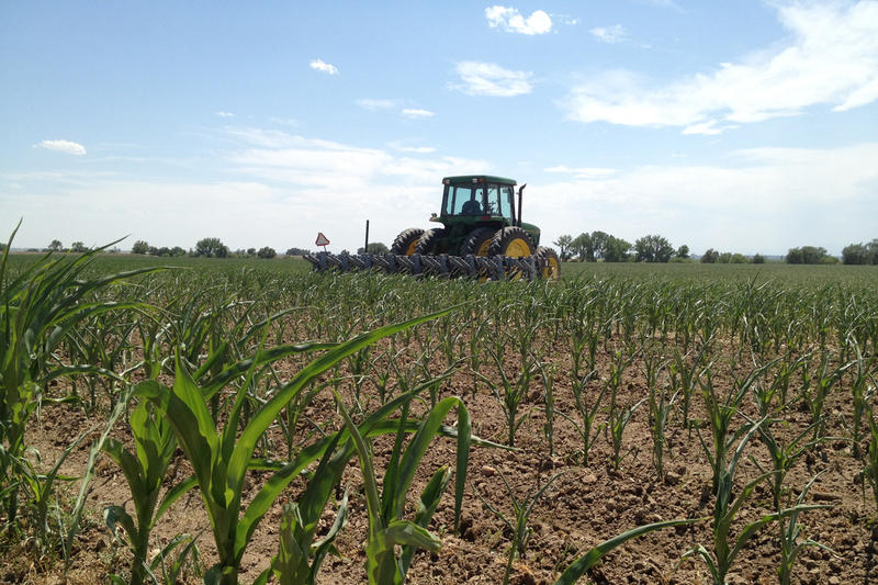 This year, the outlook for these crops depends largely on where they're planted.