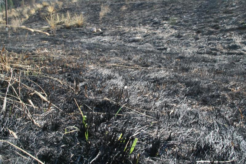 The High Park Burn zone covers more than 87,000 acres. Aerial Mulching will take place in some of most heavily scorched areas.