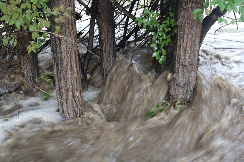 Water rushes around trees in Loveland's Fairgrounds Park Sept. 12.