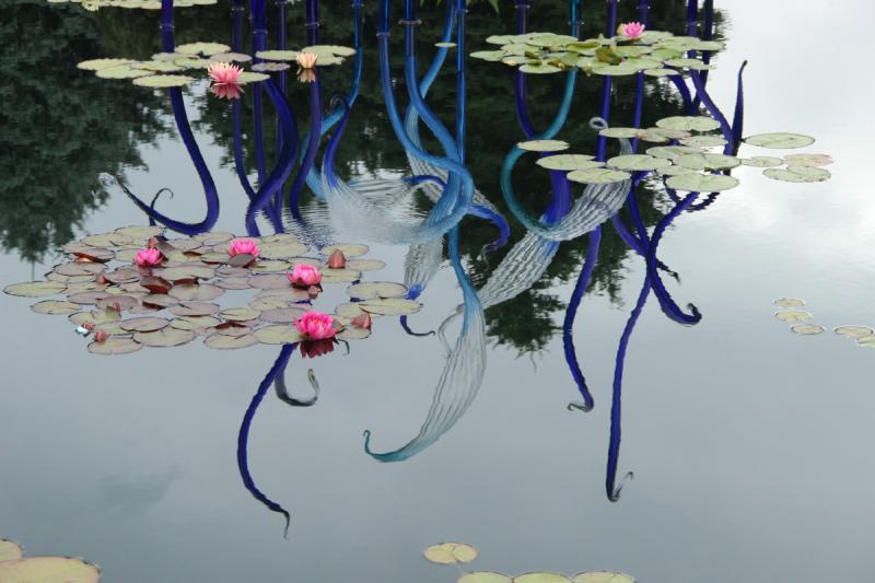 "Reflection of the ""Monet Pool Fiori"" at the Denver Botanic Garden"
