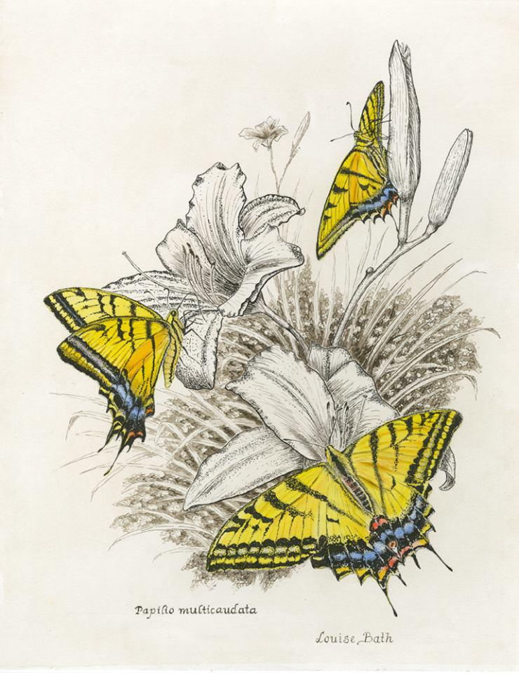 Learning to draw and paint pollinators is another skill taught at the school. This image is by Louise Barth.