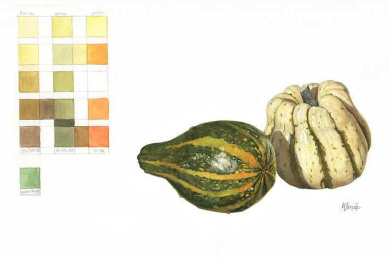 Students also illustrate fruits and vegetables. These gourds, done in watercolor, were created by student Meredith Feniak using only the colors shown in the grid.
