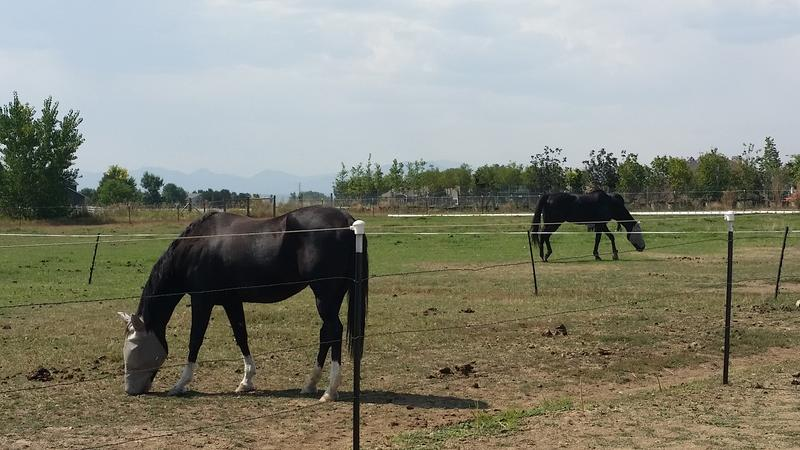 Horses graze the CRTC's property.