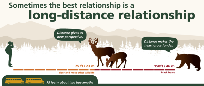 The Safe Wildlife Distance campaign used buses to create a visual cue for people to know how far to be from wildlife.