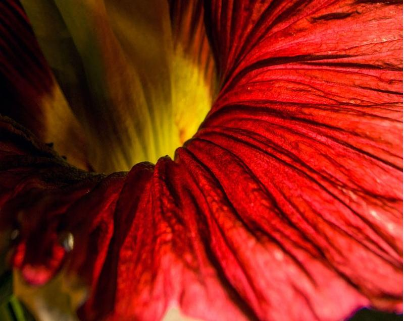 This is a flower that smells very, very, very, very, very, very, very bad. But we still love it.