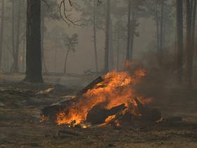 The Whitewater-Baldy fire in the Gila National Forest, May 2012.