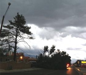 A ponderosa took down power lines in southeast Albuquerque Friday night.