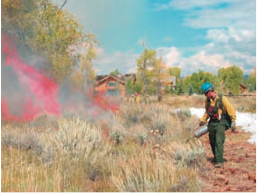 Homeowners and land managers in the Wild Urban Interface are responsible for clearing areas around homes, making them fireproof rather than fire prone. Here the area is being treated with a prescribed burn to remove dry fuels from the landscape.