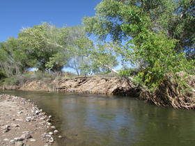 The Gila River, downstream of a proposed diversion project in New Mexico.