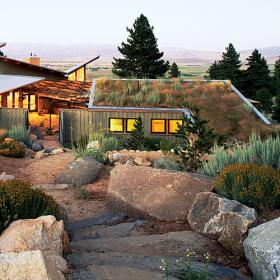 A green roof in the desert