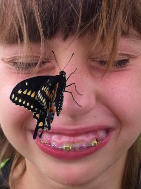 Black swallowtail that Emma hatched