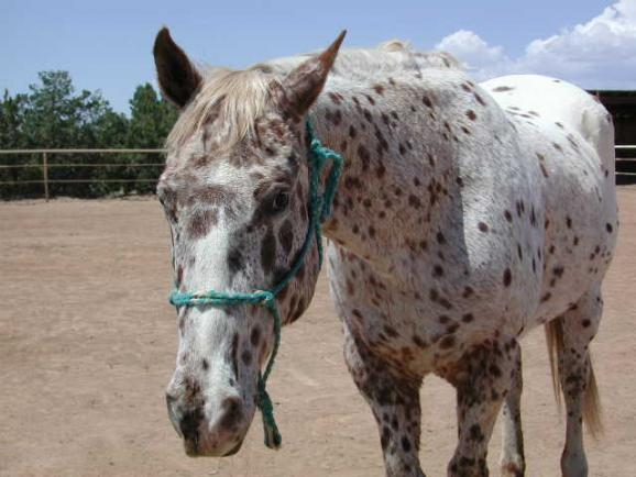 Skip-A-Zip was rescued from an operation that kept her pregnant most of the ...
