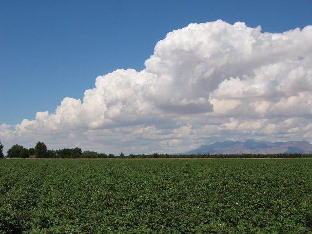 New Mexico farmland