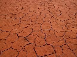 Due to lack of water, the earth is cracked and dry.