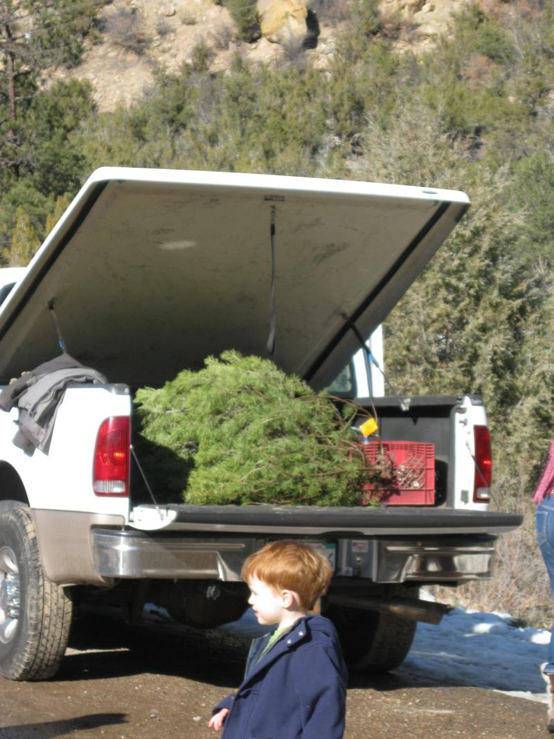 Four year-old Aidan and his family's white pine.