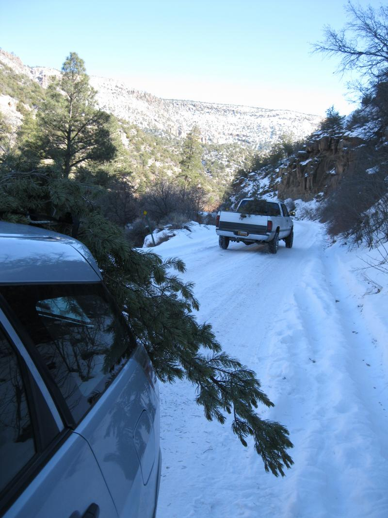 Christmas tree cutters brave snowy roads in Jemez.