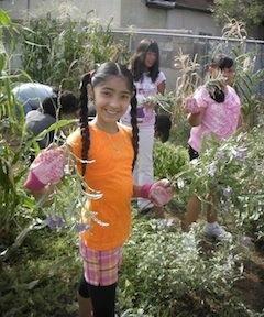 Local students learn the value of growing their own foods with help from the APS Growing Gardens Team.