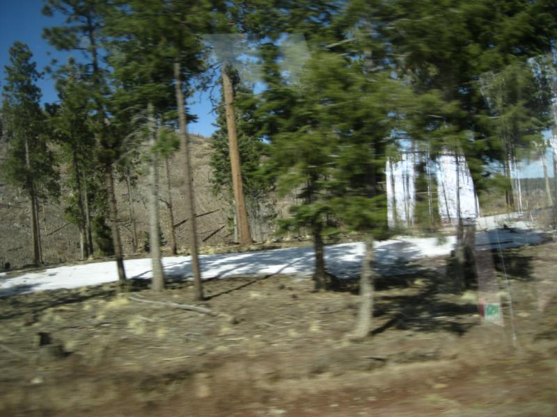A picture out the bus window between Valles Caldera and Bandelier.  In the front are trees in an area that has been burned about every seven years.  Behind, is an area that had not been burned previous to Las Conchas.