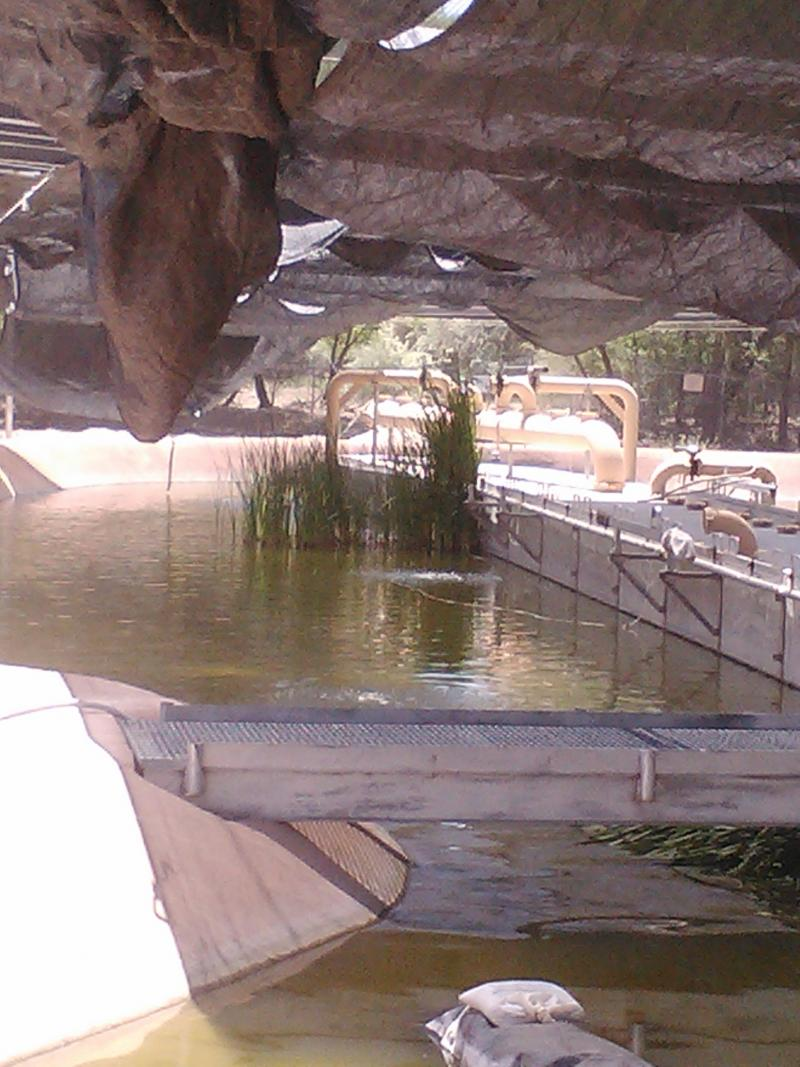 The BioPark's outdoor minnow facility, designed to mimic natural river conditions.