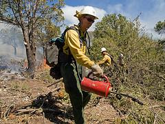 A Silver City Hotshot uses a drip torch during a burnout operation.