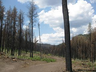 Catron County forests are still recovering from the Wallow Fire