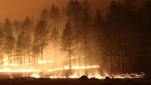 In 2011, the Las Conchas fire burned 156,000 acres in the Jemez Mountains.