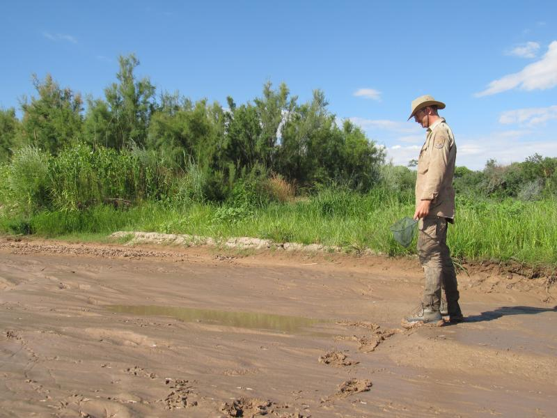 Biologist Tristan Austring readies to survey a pool for silvery minnows.