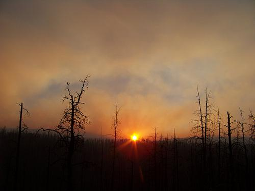 Whitewater Baldy Fire in the Gila National Forest.