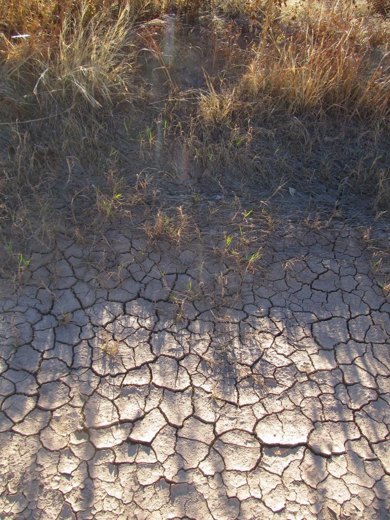 The Rio Grande in Los Lunas, NM. October 26, 2012.