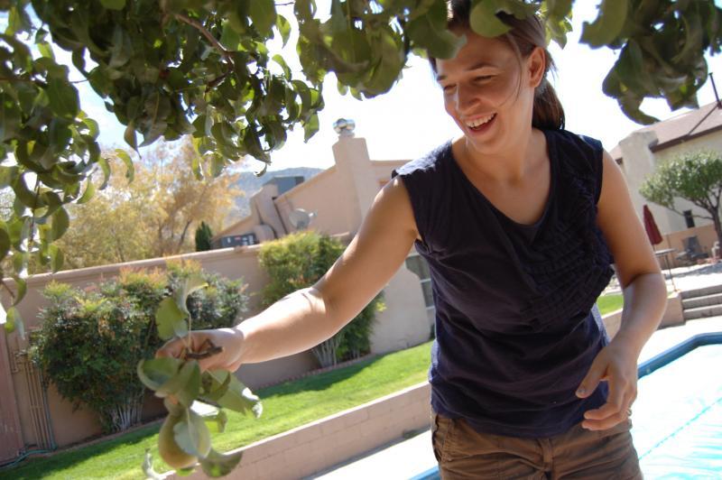 Entrepreneur Dominique Dupont Harvesting Local Pears