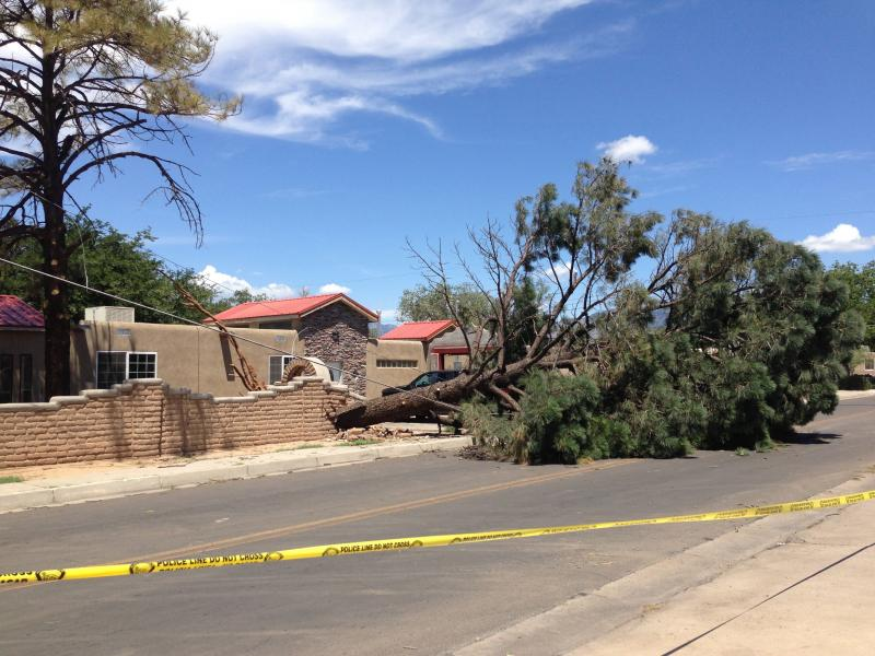 This ponderosa took down power lines in southeast Albuquerque on Friday night.