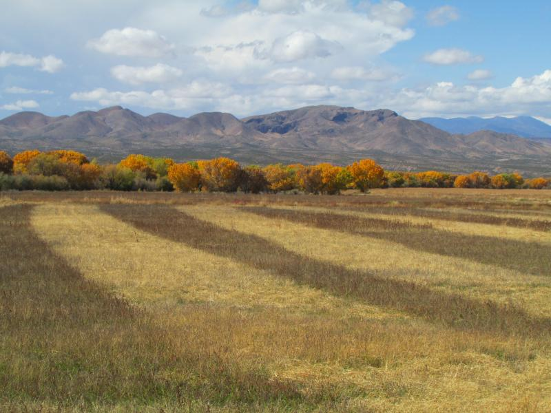 Fields at the refuge are cultivated to provide food for birds and wildlife